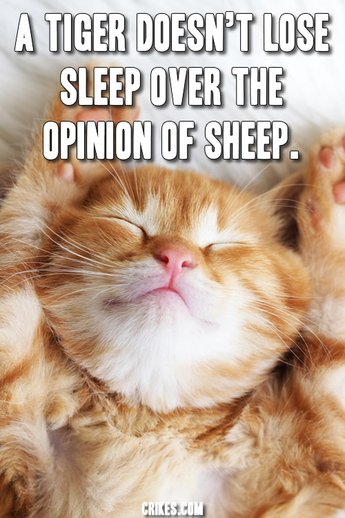 'A tiger doesn't lose sleep over the opinion of sheep.' Great quote with a photo of a kitten! Doesn't get better than that! More motivational quotes at http://www.seffsaid.com/big-gallery-motivational-photo-quotes/
